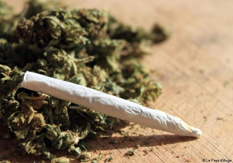 """Résultat de recherche d'images pour """"cannabis afrique"""""""